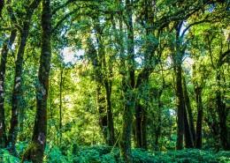 热带雨林图片(11张)