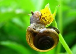 绿色植物上的蜗牛图片(10张)