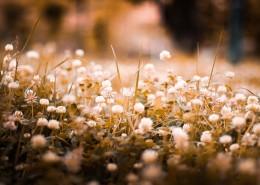 复古色调的植物背景素材图片(10张)
