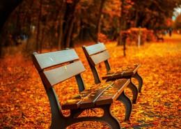 秋天公园里的长椅图片(9张)