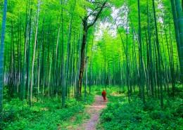 翠绿的竹林图片(14张)