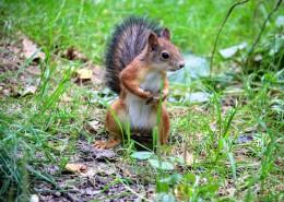 灵巧可爱的小松鼠图片(16张)