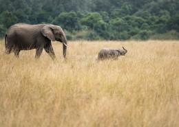 野生的大象图片(9张)
