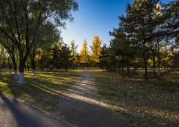 北京奥林匹克森林公园的秋天树林自然风景图片(10张)