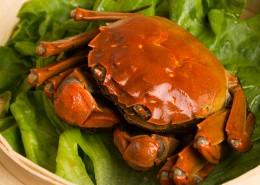 美味清蒸大闸蟹图片(10张)