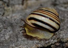 蜷缩在壳里的蜗牛图片(11张)