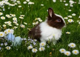 呆萌可爱的兔子图片(10张)