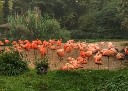 一群火烈鸟图片(15张)
