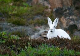 可爱的小白兔图片(10张)