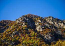 漫山遍野的金色秋景图片(10张)