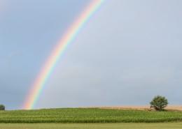 七色的彩虹图片(14张)