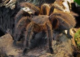 微距拍摄的蜘蛛图片(13张)