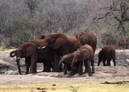 聚在一起的象群图片(12张)