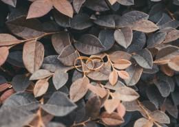 精致的戒指图片(11张)