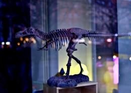 古老的恐龙化石图片(11张)