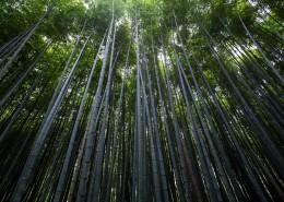 翠绿的竹林图片(10张)