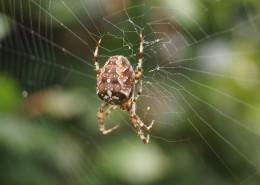 蜘蛛网高清图片(16张)