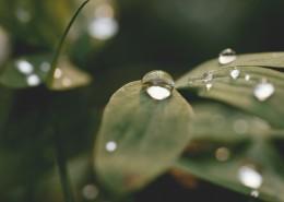 植物上的水珠图片(10张)