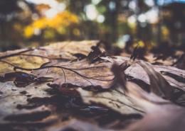 地上的落叶图片(11张)