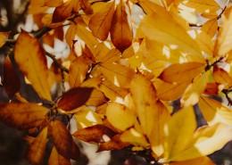树枝上枯黄的树叶图片(10张)