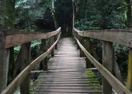 古朴的木桥图片(16张)