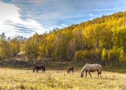 乌兰布统草原秋天自然风景图片(15张)