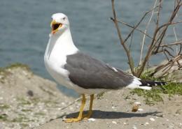 停留在地面上的海鸥图片(15张)