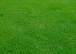 平坦的绿色草坪图片(13张)