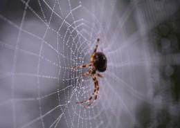 蜘蛛网上的蜘蛛图片(10张)