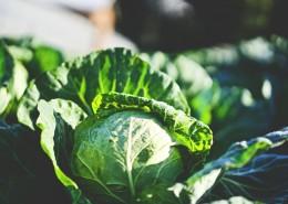 绿色蔬菜的特写图片(12张)