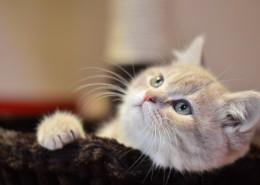 宠物猫的特写图片(12张)