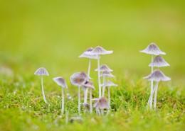 小清新的蘑菇图片(10张)
