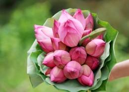红莲花图片(12张)