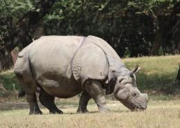 一头高大强健的犀牛图片(14张)