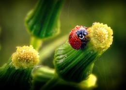 可爱的瓢虫图片(11张)
