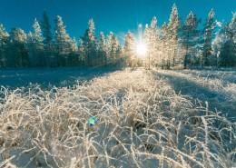 冬天被雪覆盖的树图片(14张)