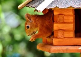 房子里的小松鼠图片(9张)