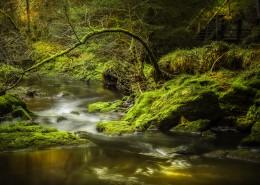 森林里的溪流图片(12张)
