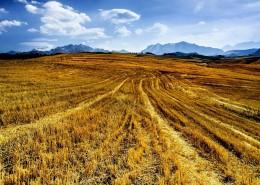 新疆江布拉克自然风景图片(10张)