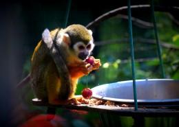 可爱的蜘蛛猴图片(10张)