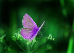 美丽的蝴蝶图片(10张)