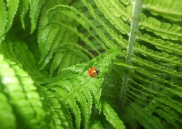 绿色蕨类植物图片(14张)