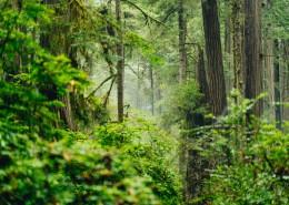 茂密的树林图片(15张)