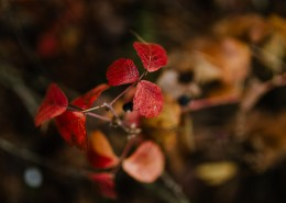 秋天森林的各个角落特写