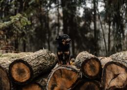 站在树干上的狗图片(10张)