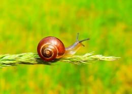 背着壳的蜗牛图片(10张)