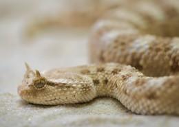 不同品种的蛇图片(13张)