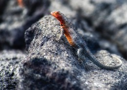 不同种类的蜥蜴图片(11张)