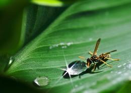 剧毒的黄蜂图片(10张)