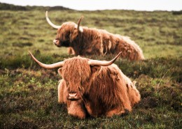 牦牛的特写图片(12张)